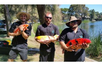 feral fish eradication