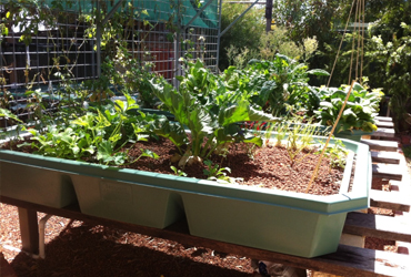 aquaponics services Perth Australia